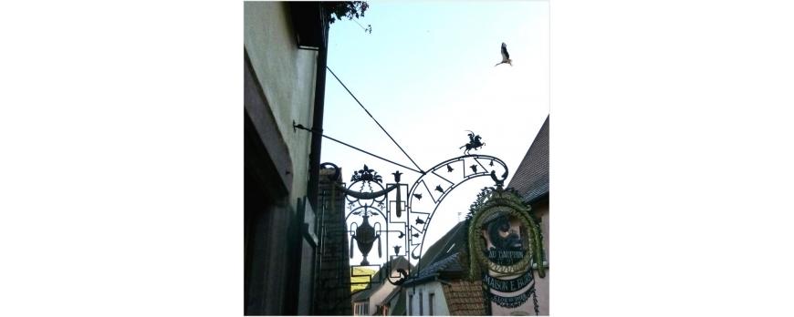 Une cigogne survole la rue basse à Gueberschwihr