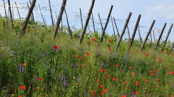 Biodiversité du Clos Saint-Imer